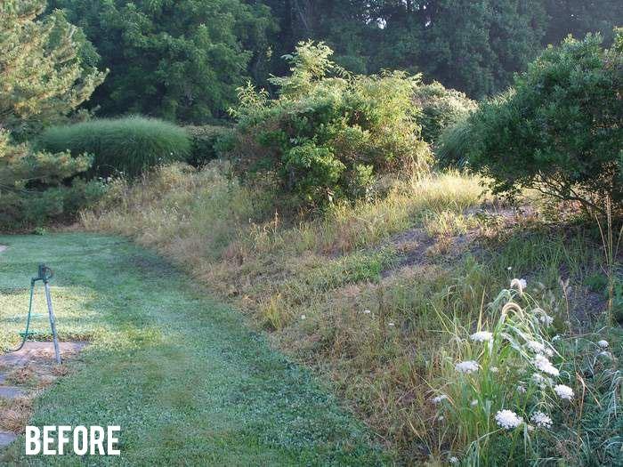 harford-county-before-mulching
