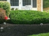 bel air pruning hedges full service