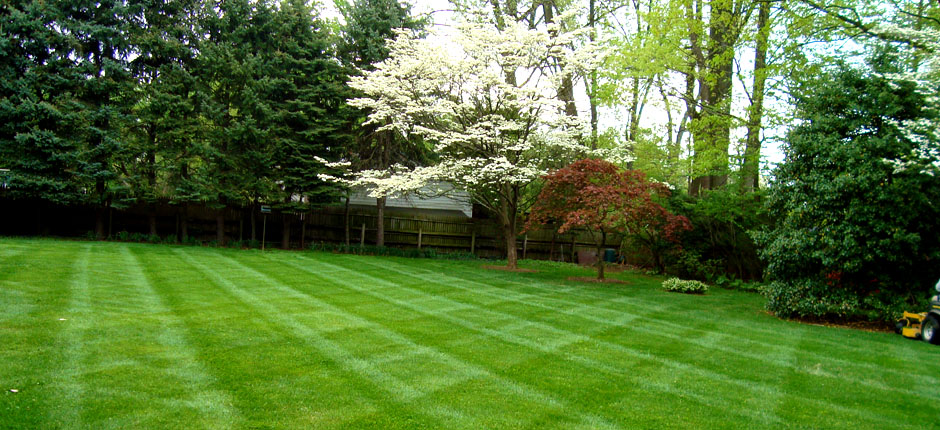 Bel Air Md Lawn Cutting Grass Mowing Jsm Lawncare