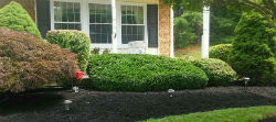 Pruning bel air md